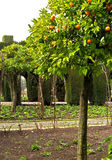 04 alhambra Γρανάδα Στοκ φωτογραφία με δικαίωμα ελεύθερης χρήσης