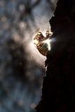 04 cicadas μια κορυφή Στοκ Φωτογραφίες