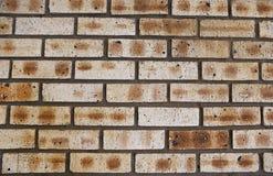 04 facebrick步骤墙壁 库存图片