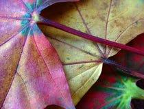 04 jesiennych liści Obrazy Royalty Free