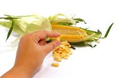 04 kukurydzanej serii Obrazy Stock