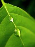 04 zrzutu liściach wody Obraz Stock