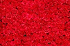 05朵玫瑰 库存照片