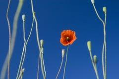 05朵花愉快的春天夏天 免版税库存照片