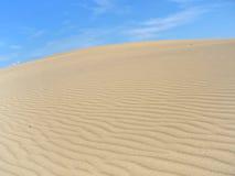 05片沙漠横向taiga 免版税库存照片