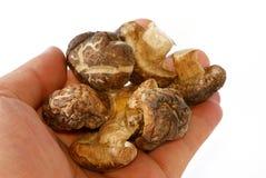 05 серий грибов Стоковое Изображение