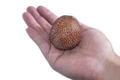 05 серий salak плодоовощей Стоковое фото RF