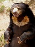 05 niedźwiedź Obraz Stock