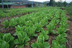 05 organici di verdure Fotografia Stock Libera da Diritti