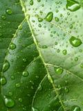 05 zrzutu liściach wody Zdjęcia Stock