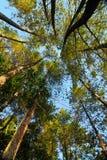 06自然资源 免版税库存照片
