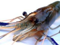 06 γαρίδες τροφίμων Στοκ Φωτογραφία