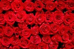 06 роз Стоковая Фотография