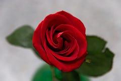 06 blommor steg Royaltyfri Bild