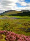 06 cairngorm国家公园 库存图片