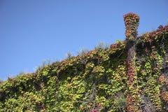 06 colliery fuerst przerośnięty hardenberg vegatation Zdjęcie Royalty Free