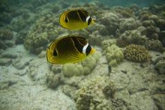 0606珊瑚礁 免版税库存照片