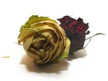 07朵停止的玫瑰 免版税库存图片