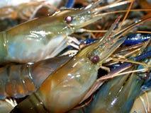 07食物虾 库存图片