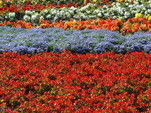 07 flor Obraz Stock