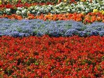 07 floror Fotografering för Bildbyråer