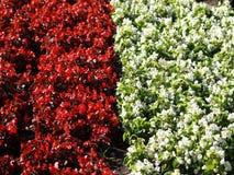 08植物群 图库摄影
