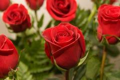 08 λουλούδια αυξήθηκαν Στοκ Εικόνες