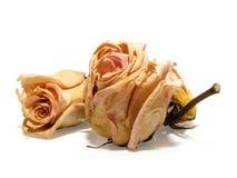 08 νεκρά τριαντάφυλλα Στοκ Εικόνες