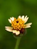 09朵花本质 库存图片