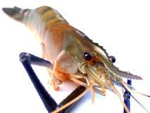 09食物虾 免版税库存照片