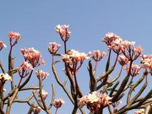 09 kwiat Zdjęcia Stock