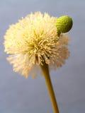 09 roślinnych abstrakcj Obraz Royalty Free