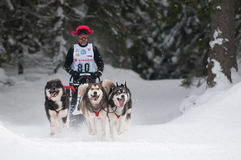 1ò Campeonato de competência Slovakia do sleddog europeu Foto de Stock Royalty Free