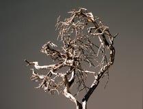 1个停止的结构树 免版税库存照片