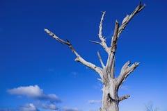 1个停止的结构树 库存照片