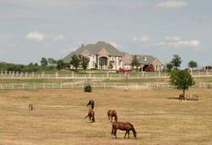 1个农村庄园全部的马 库存照片