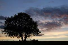 1个剪影日落结构树 免版税库存照片
