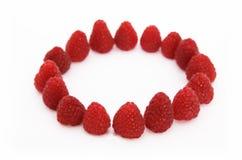 1个圈子莓 库存照片