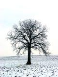 1个域结构树冬天 库存图片