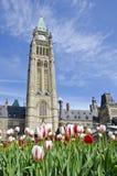 1个大厦渥太华议会郁金香 库存图片