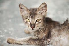 1个小猫迷路者 免版税库存照片