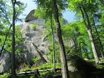 1个岩石结构树 免版税库存照片