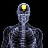 1个想法光芒概要x 向量例证