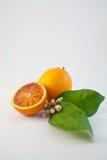 1个桔子 免版税图库摄影