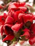 1个棉花红色结构树 库存图片
