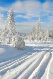 1个森林没有多雪 免版税库存照片