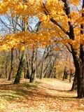 1个森林路径 免版税图库摄影