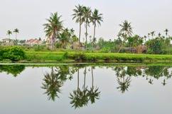 1个椰子hoian结构树 库存图片