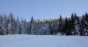 1个横向冬天 库存照片