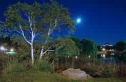 1个横向晚上公园 免版税图库摄影